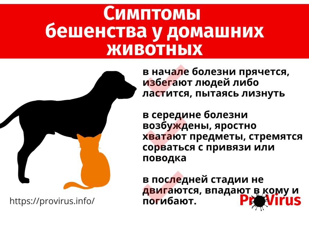 Симптомы бешенства у домашних животных