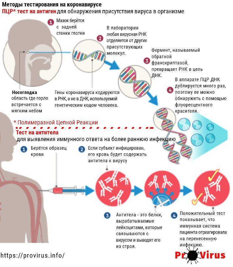 Тестирование на коронавирус способом ПЦР и тестирование на наличие антител в крови